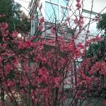 nokia-lumia-1520-kamera-fotograflari-00017