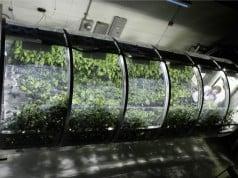 NASA Mars kolonisinde astronotlarını şişme seralarla besleyebilir