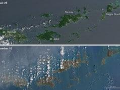 İrma Kasırgası yeşil Karayip adalarını kahverengiye boyadı